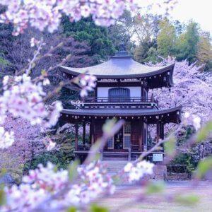 kyotopiyamashina02_03