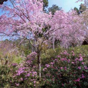 kyotopi_ohara02_02_02
