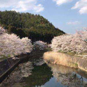 kyotopikeihoku01_03