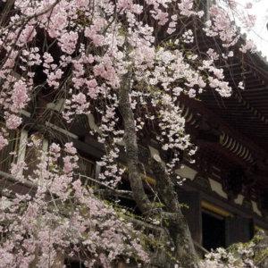 kyotopitakao01_03