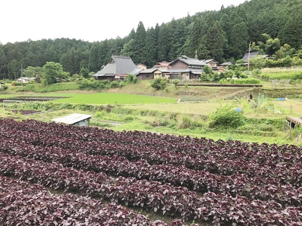 京都・大原の魅力を撮影
