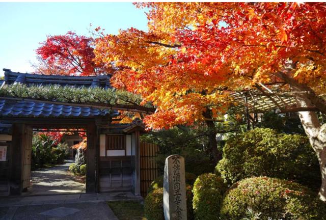 閑静な西京エリアで古寺散策と紅葉散歩