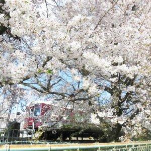arashiyamasen001