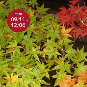 202009-02-hiraokahachimangu-hananotenjou01