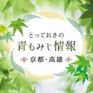takao_aomomiji_fv